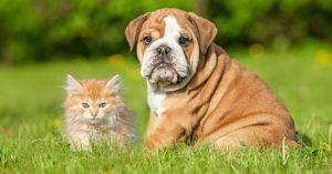 Comment choisir la mutuelle assurance pour son animal de compagnie ?
